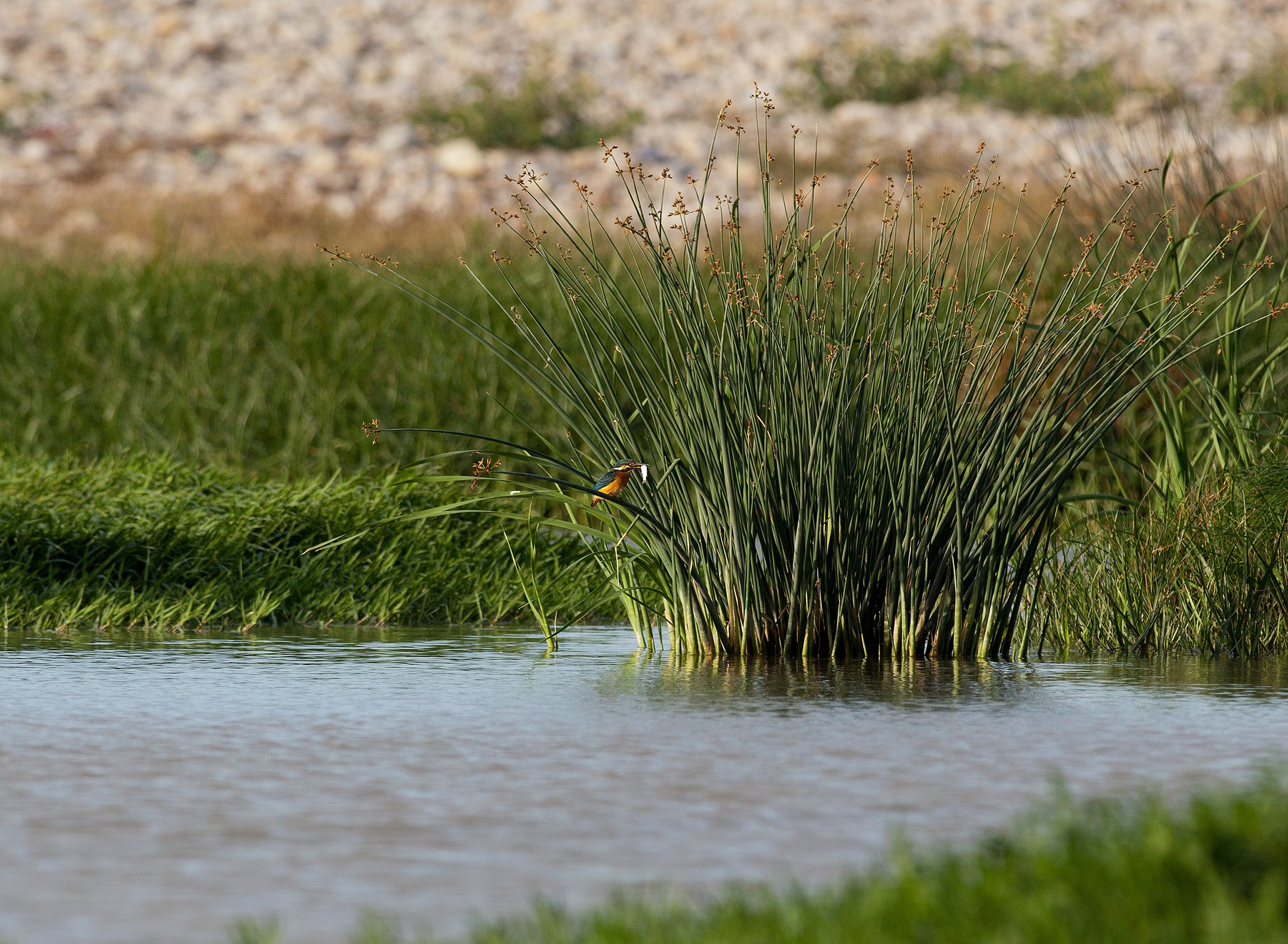 Trigno River (Renato Corradi)