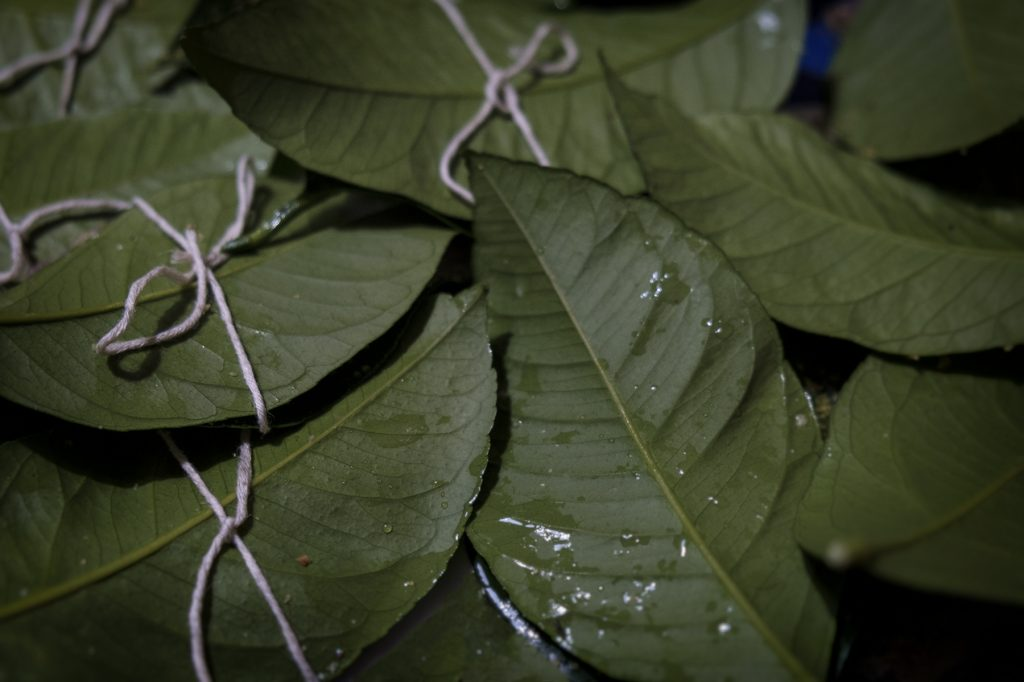 cottura su foglie di limone